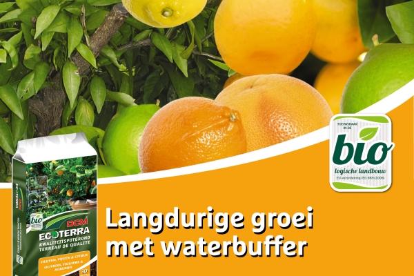 facebook-potgrond-olijven-vijgen-citrusA82FAF7A-3E6D-9ED5-D06D-6418C20541DA.jpg